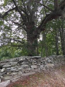 Tree,StoneWall